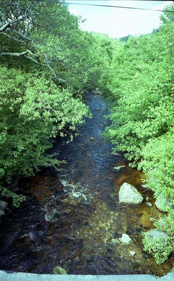 美しい水が地面から湧き出ています。